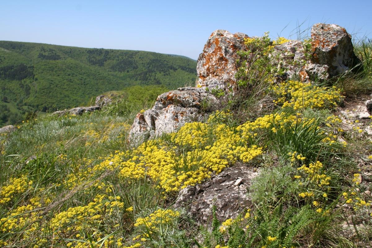 Жигулевский Государственный природный заповедник им.И. И. Спрыгина (Самарская область)