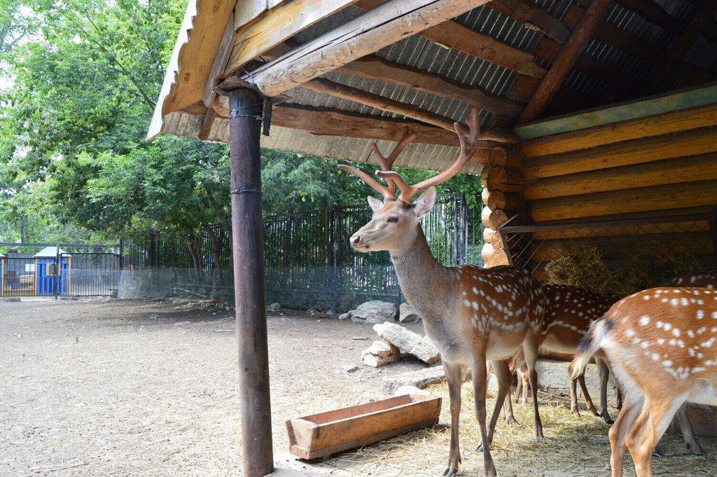 Казанский зооботанический сад (Казань)