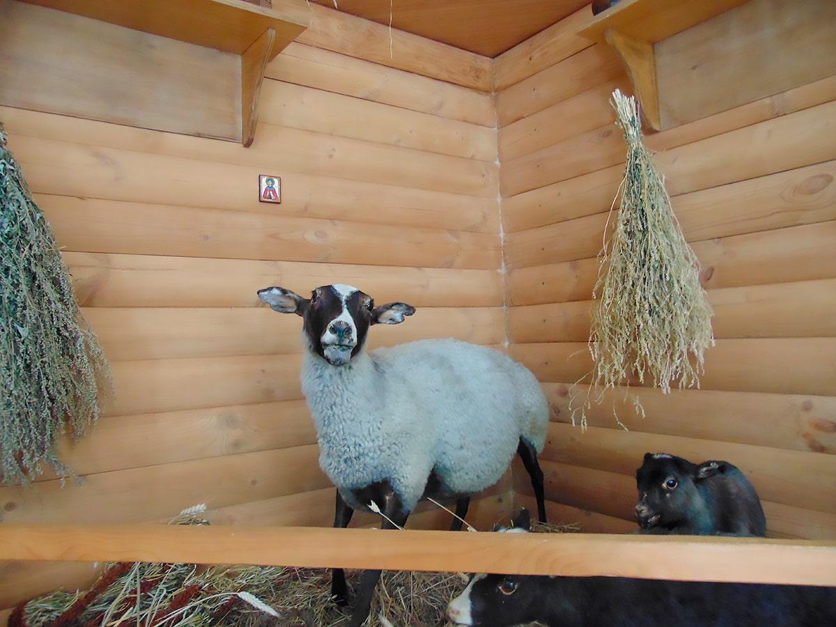 Музей романовской овцы (Тутаев)