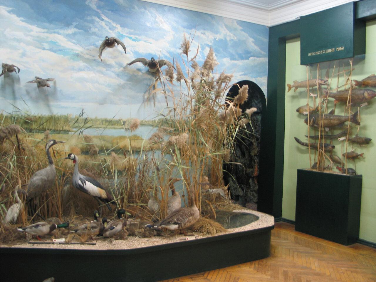 Народный музей природы ст. Ясенской (Ейск)