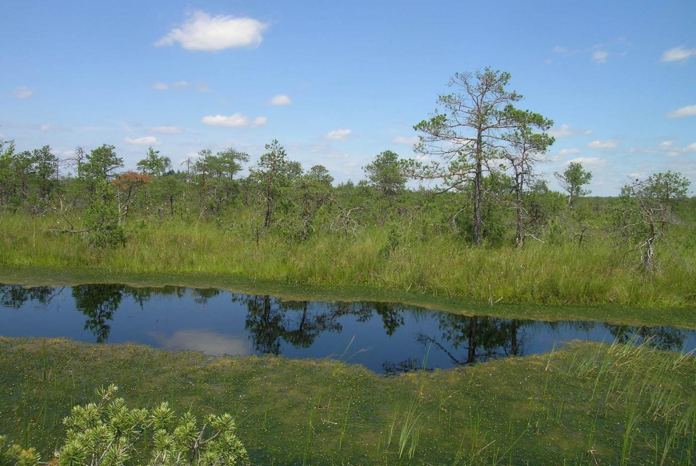 Памятник природы «Верховое болото» (Лотошино)
