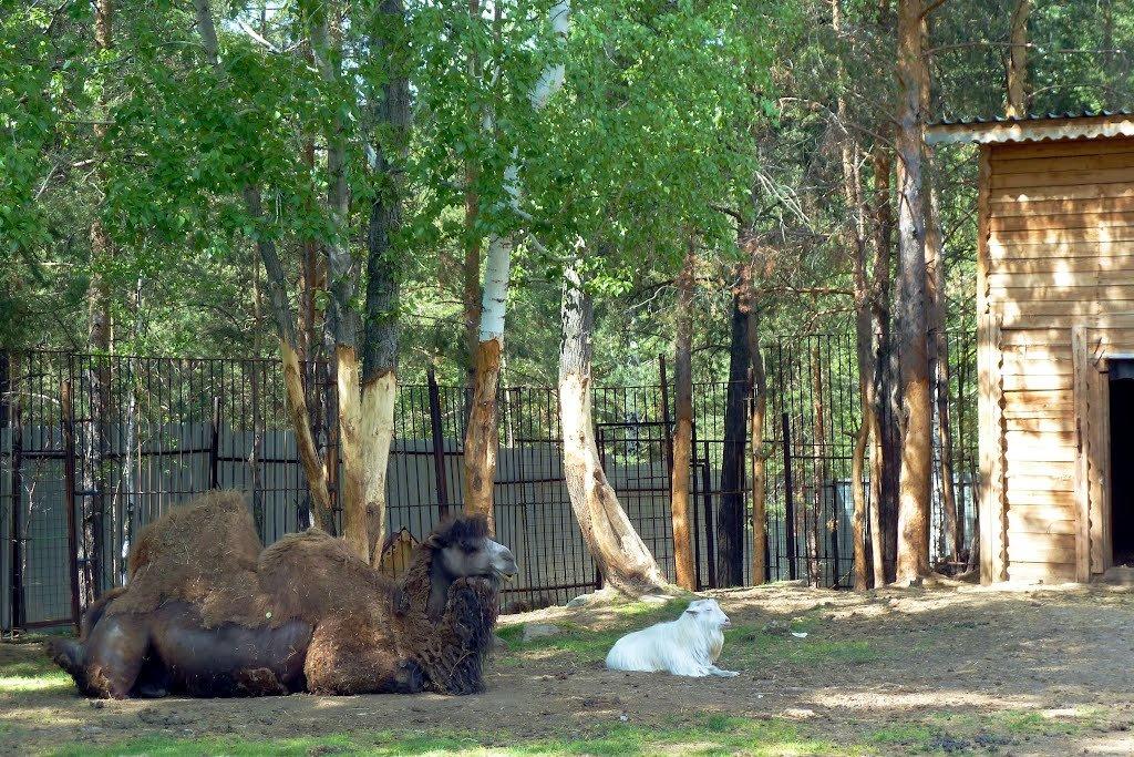 Зоопарк Первоуральска (Первоуральск)