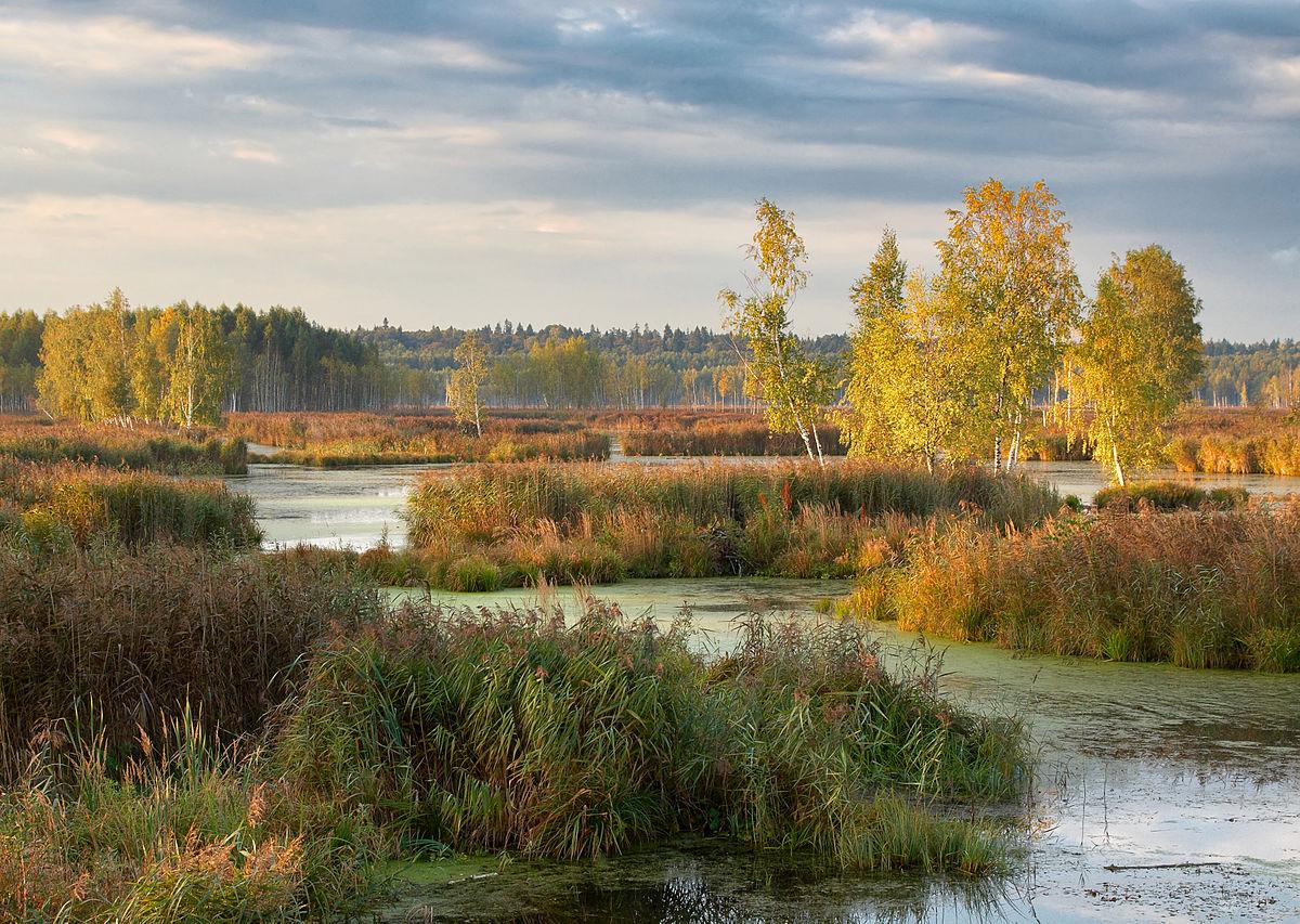 Национальный парк «Лосиный остров» (Москва)
