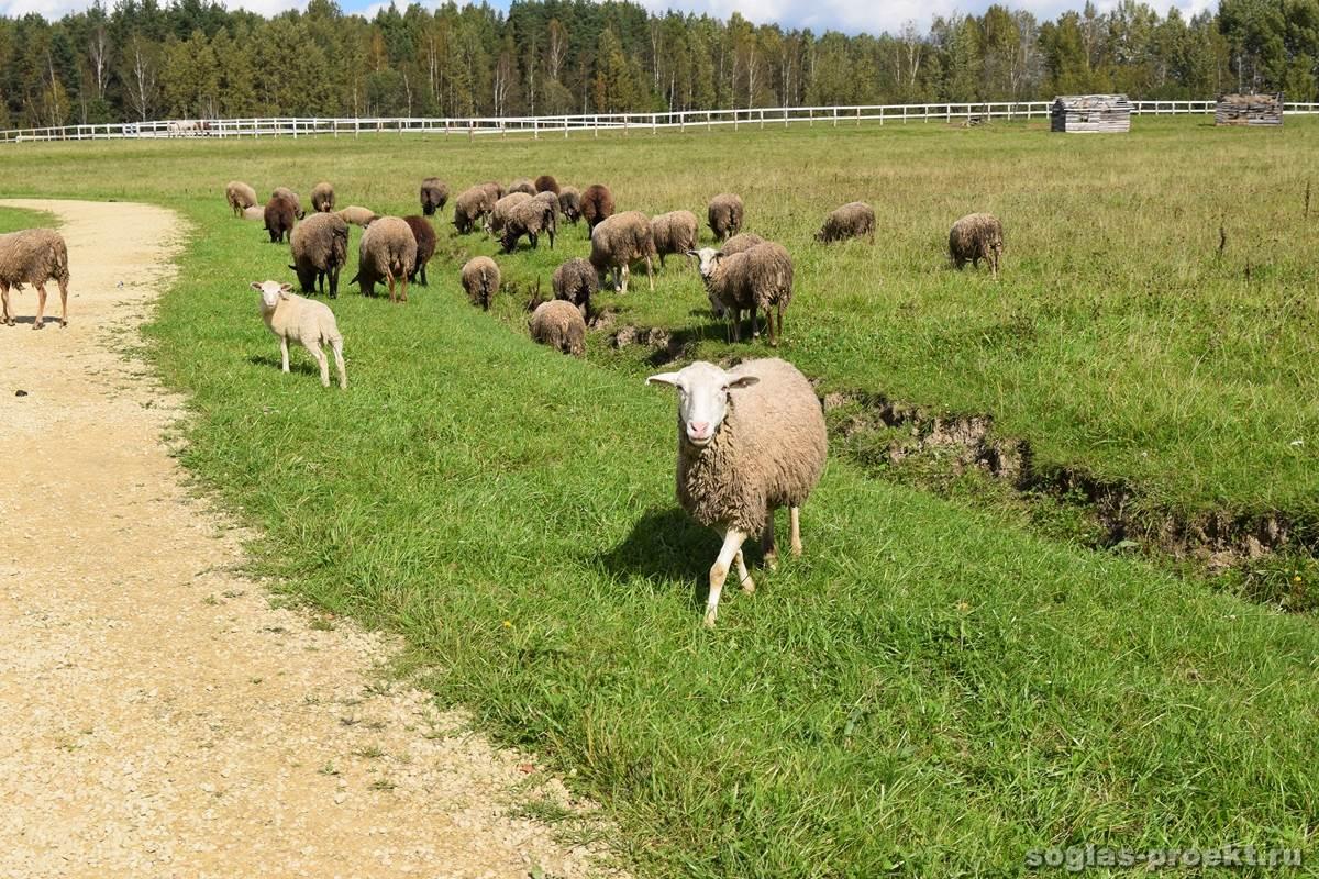 Ферма «Марьино» (Тосно)