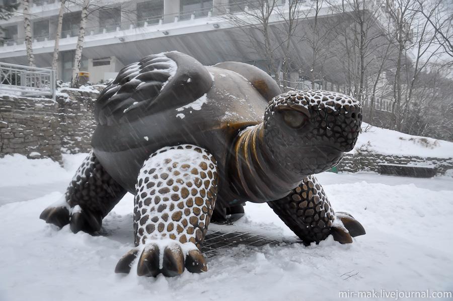 Скульптура огромной черепахи (Юрмала)
