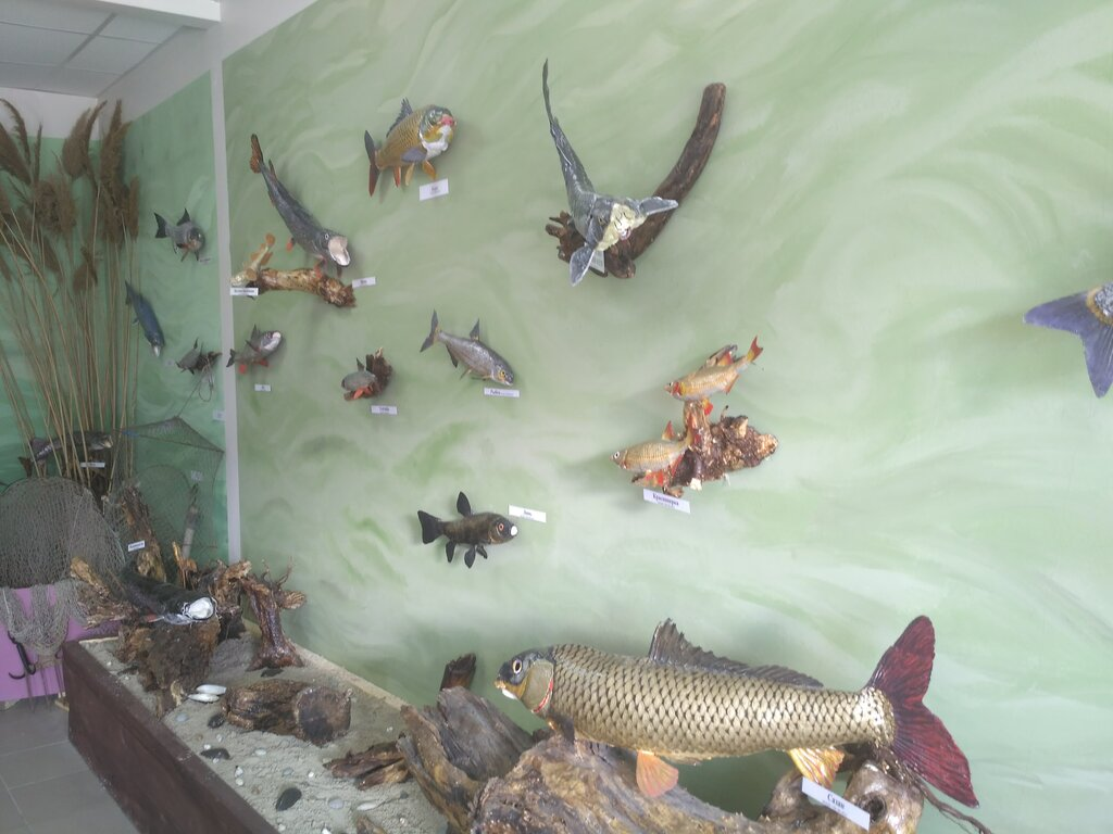 Музей «Донская рыба» (Ростовская область)