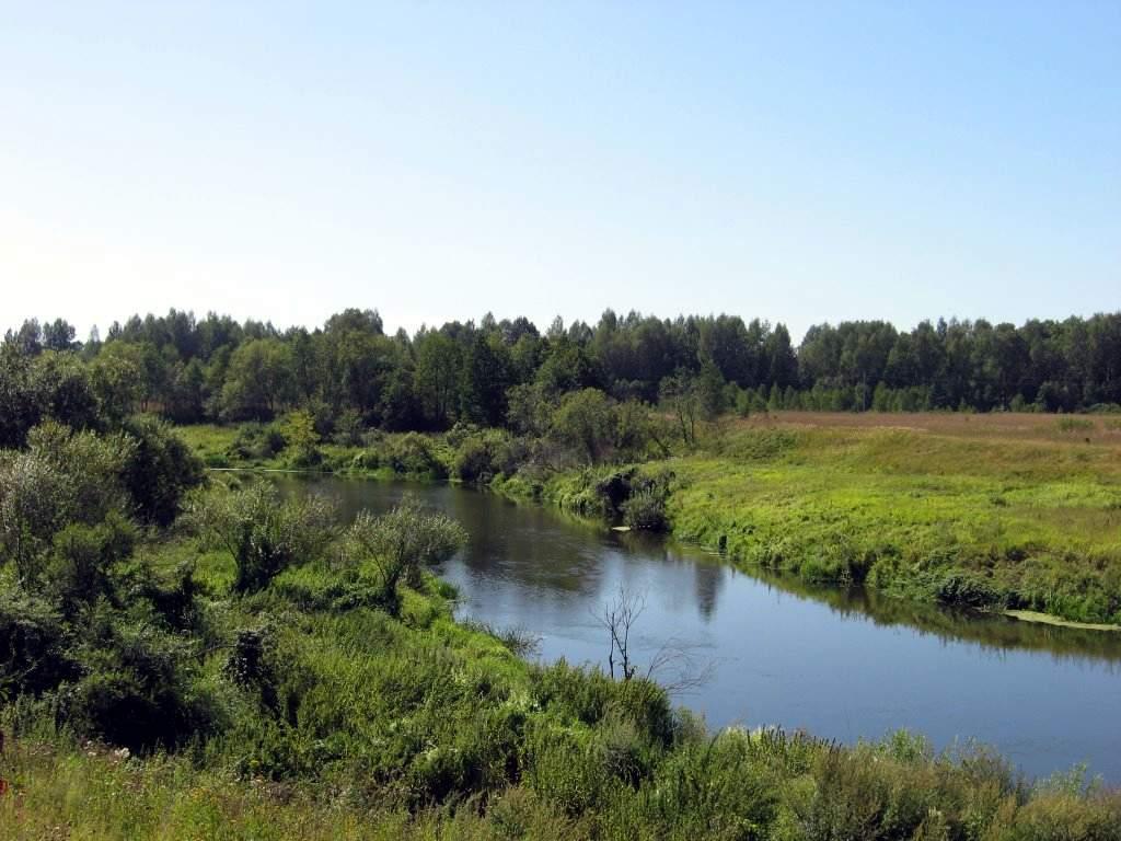 Заказник «Междуречье рек Большая и Малая Сестра» (Лотошино)