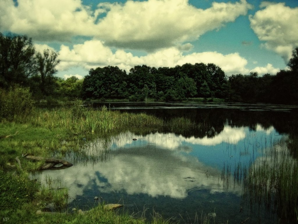 Лесное озеро (Калининград)