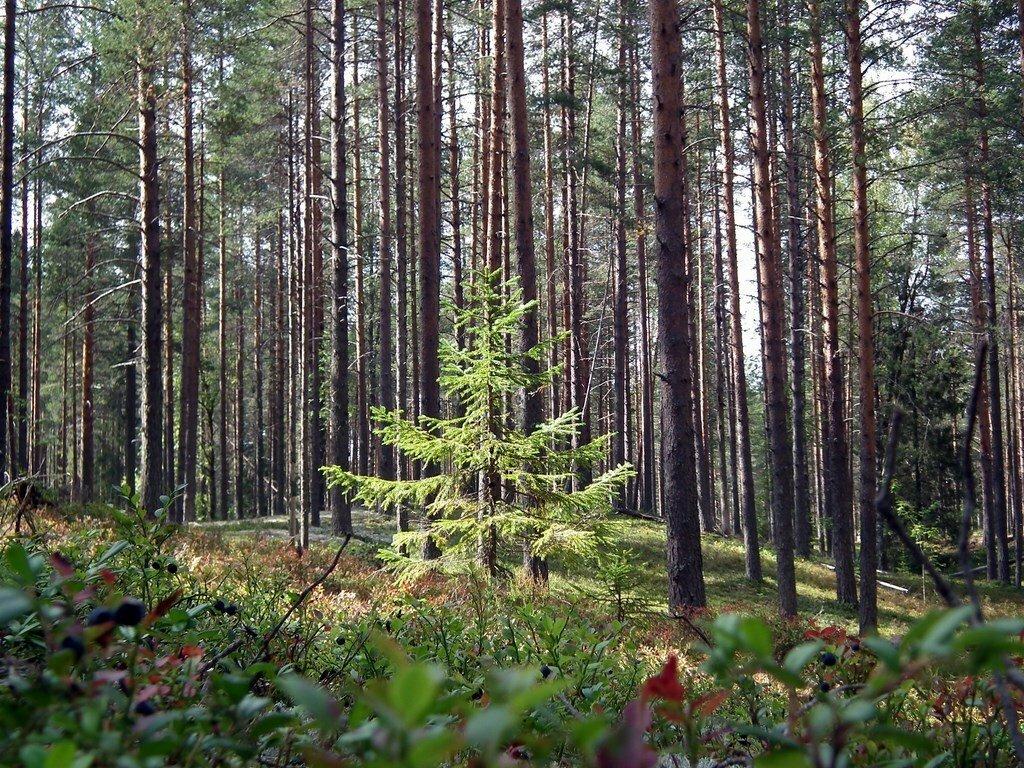 Национальный парк «Русский Север» (Кириллов)