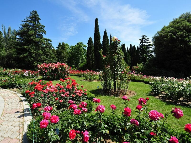 Никитский ботанический сад (Ялта)