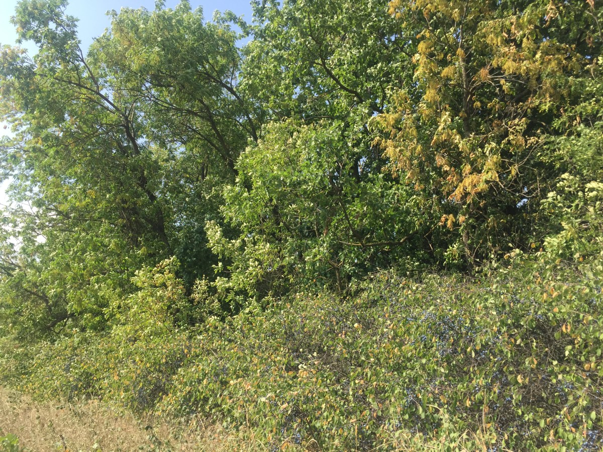 Бейсугский лес (Краснодарский край)