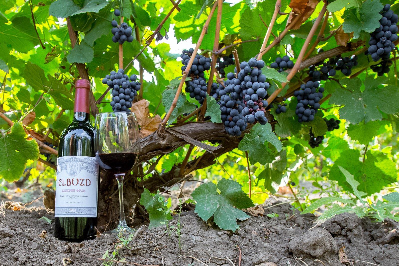 Донское винодельческое хозяйство «Эльбузд» (Ростовская область)