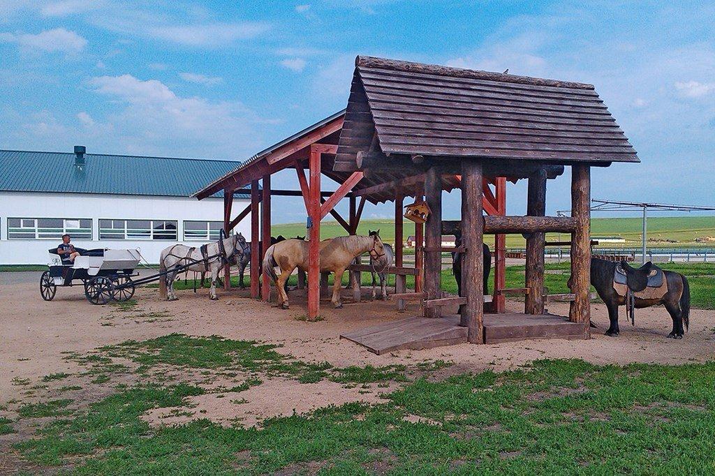 Конный двор «Сибирское подворье» в Новотырышкино (Белокуриха)
