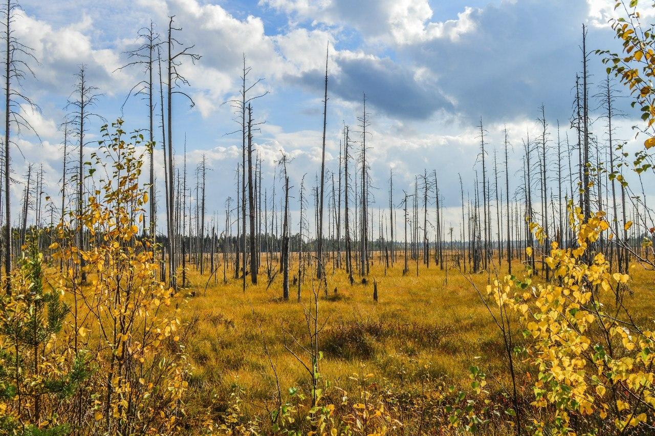 Водлозерский национальный парк (Архангельская область)