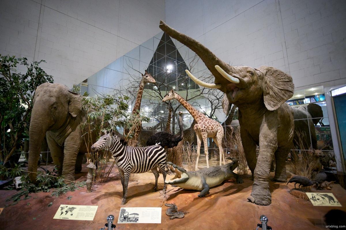 Дарвиновский музей (Москва)