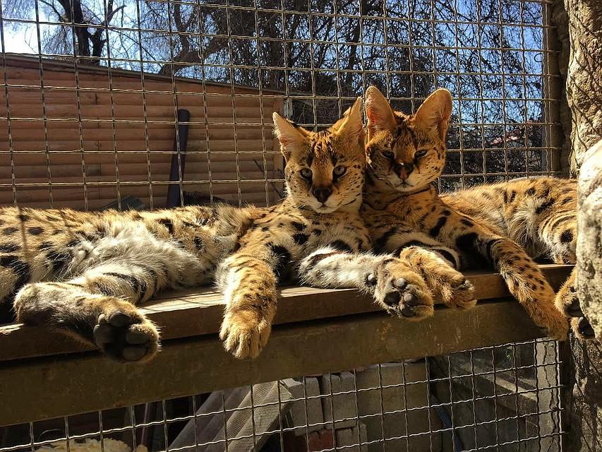 Мини-зоопарк (Джанкой)