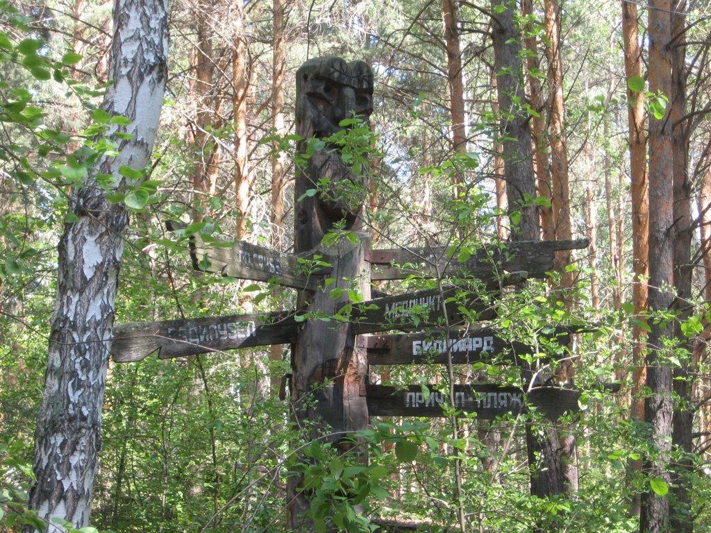 Бердская лесная дача (Бердск)