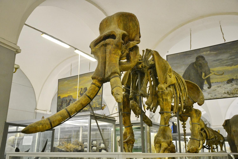 Зоологический музей (Санкт-Петербург)