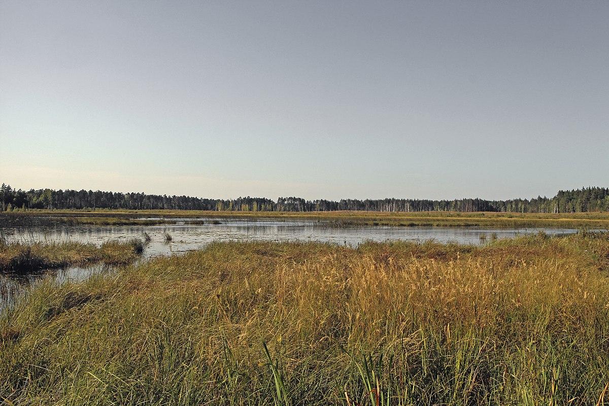 Озеро Чистое (Тамбовская область)